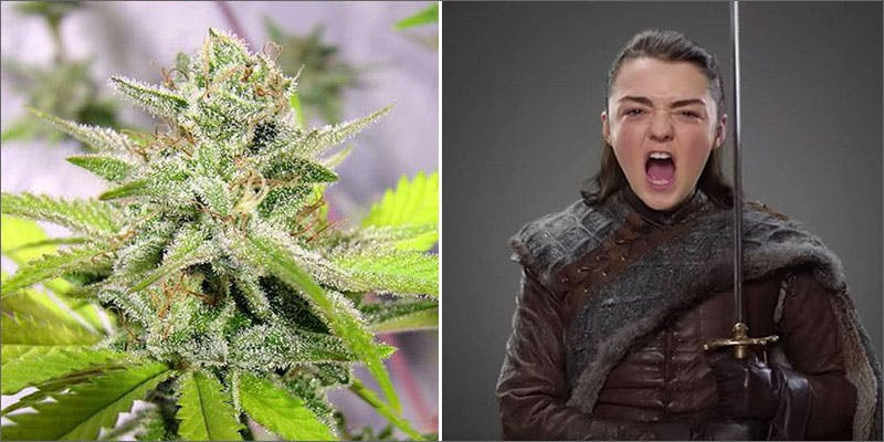 arya Cops Advertised For Weed In This School Newsletter