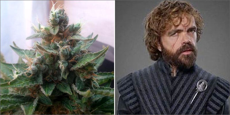 tyrion Cops Advertised For Weed In This School Newsletter