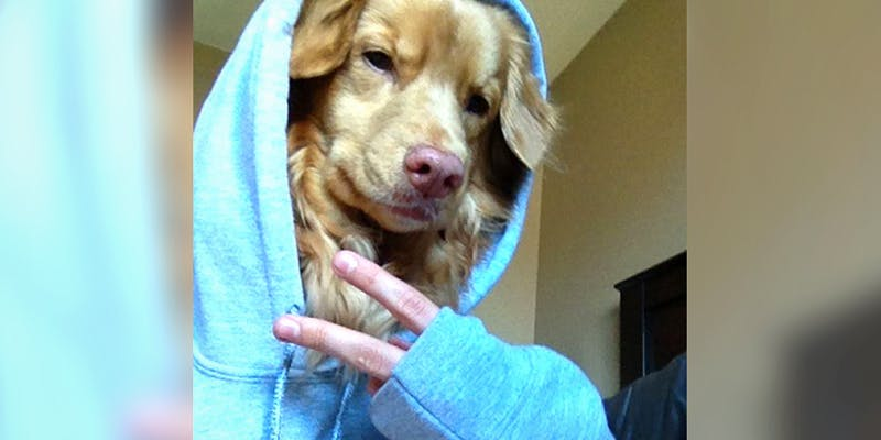 10 Dog Bios 1 2 10 Dogs That Will Hilariously Remind You Of A Stoner You Know