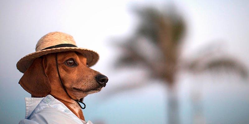 10 Dog Bios 3 2 Cannabis Oil Helped This Woman Beat Terminal Brain cancer