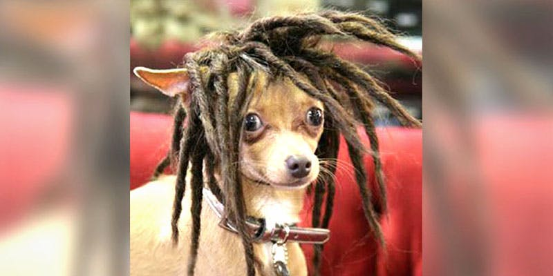 10 Dog Bios 5 2 10 Dogs That Will Hilariously Remind You Of A Stoner You Know