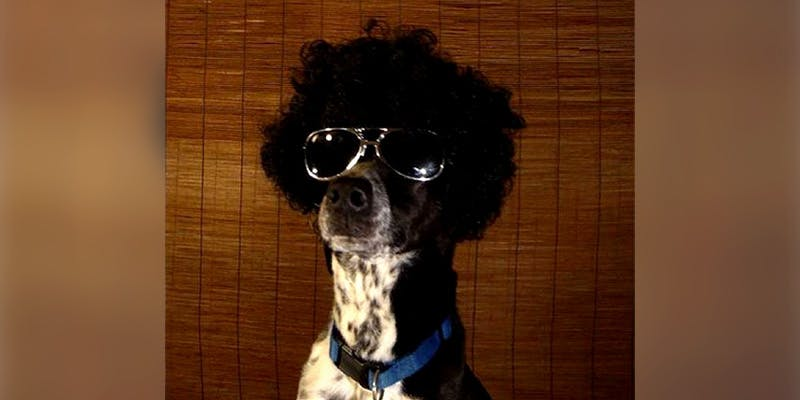10 Dog Bios new 10 Dogs That Will Hilariously Remind You Of A Stoner You Know