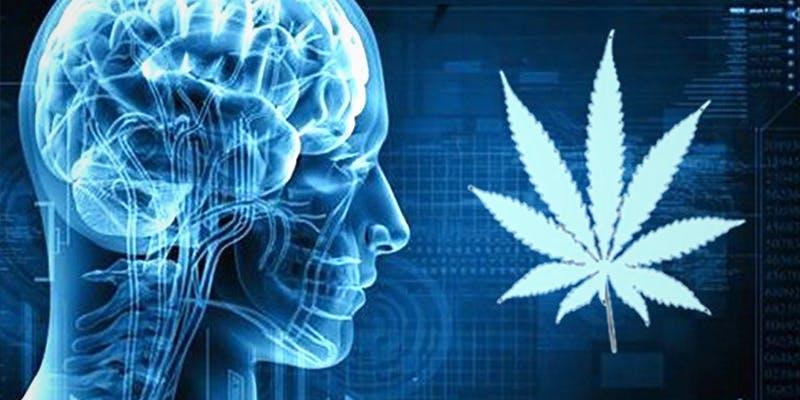 10 Medical Cannabis 9 10 Medical Cannabis Myths Busted