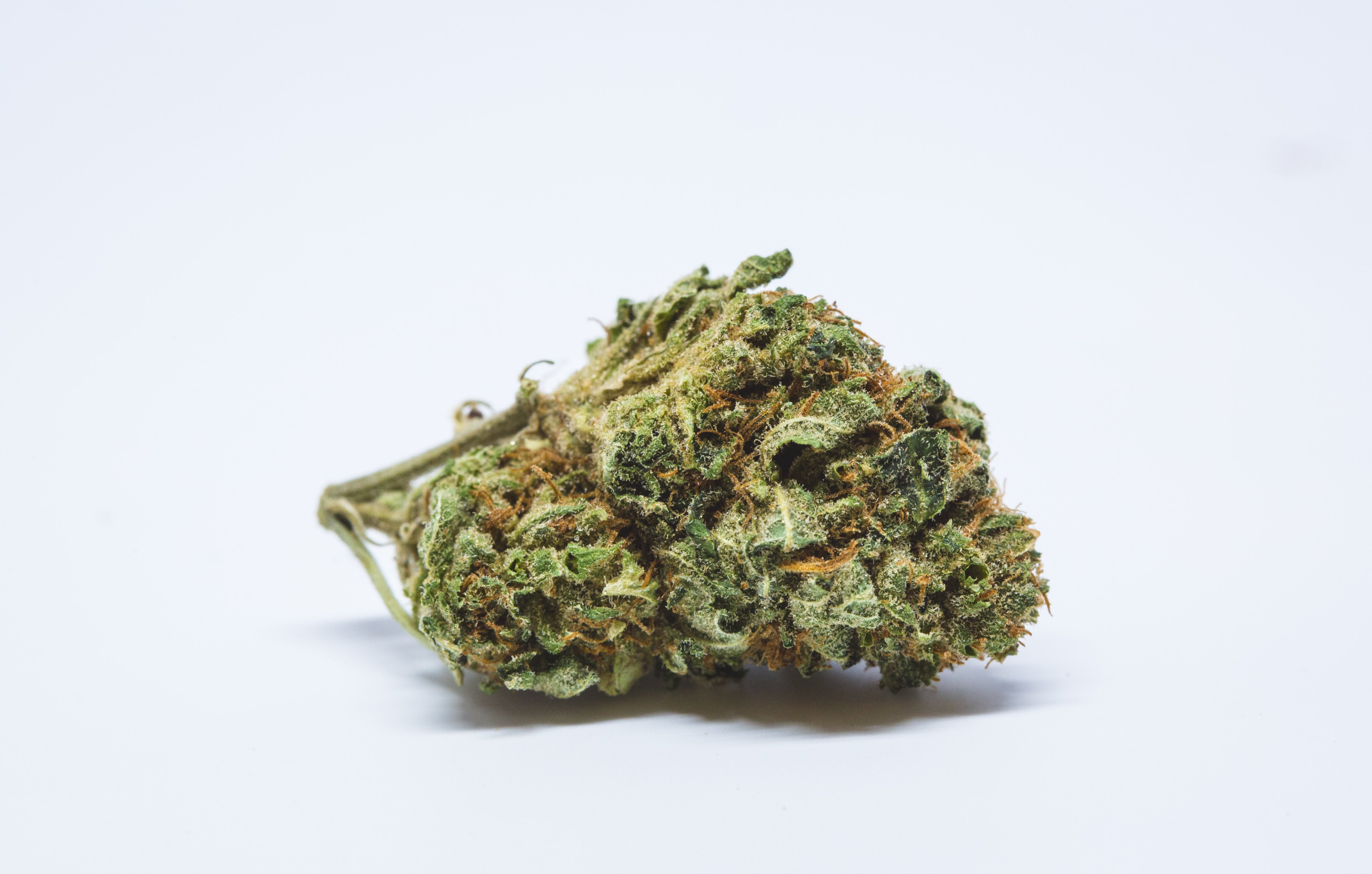 Allevi8 Jack Herer 24 These Bible Belt Christians Believe That Weed Is God's Perfect Medicine
