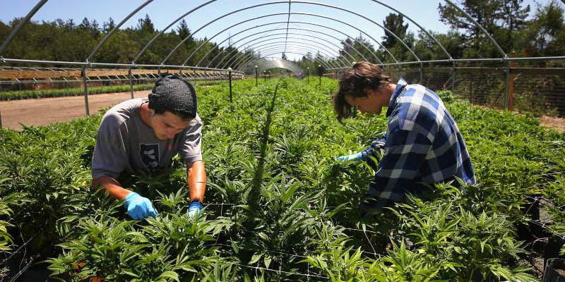 California Plans To 2 These Bible Belt Christians Believe That Weed Is God's Perfect Medicine