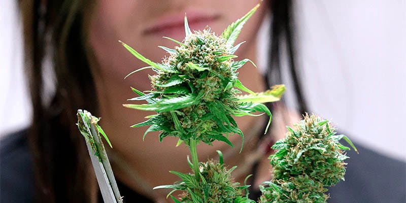 Cannabis Jobs Count 17 New Report Reveals 150,000 Americans Now Work in the Cannabis Industry
