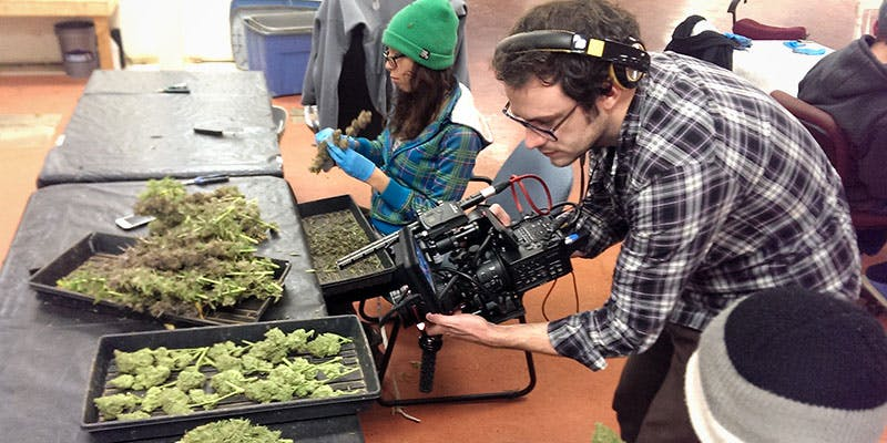 Cannabis Jobs Count 4 New Report Reveals 150,000 Americans Now Work in the Cannabis Industry