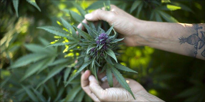 Cannabis Business Alliance