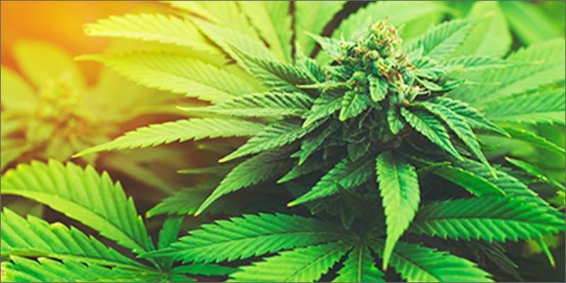 legalized