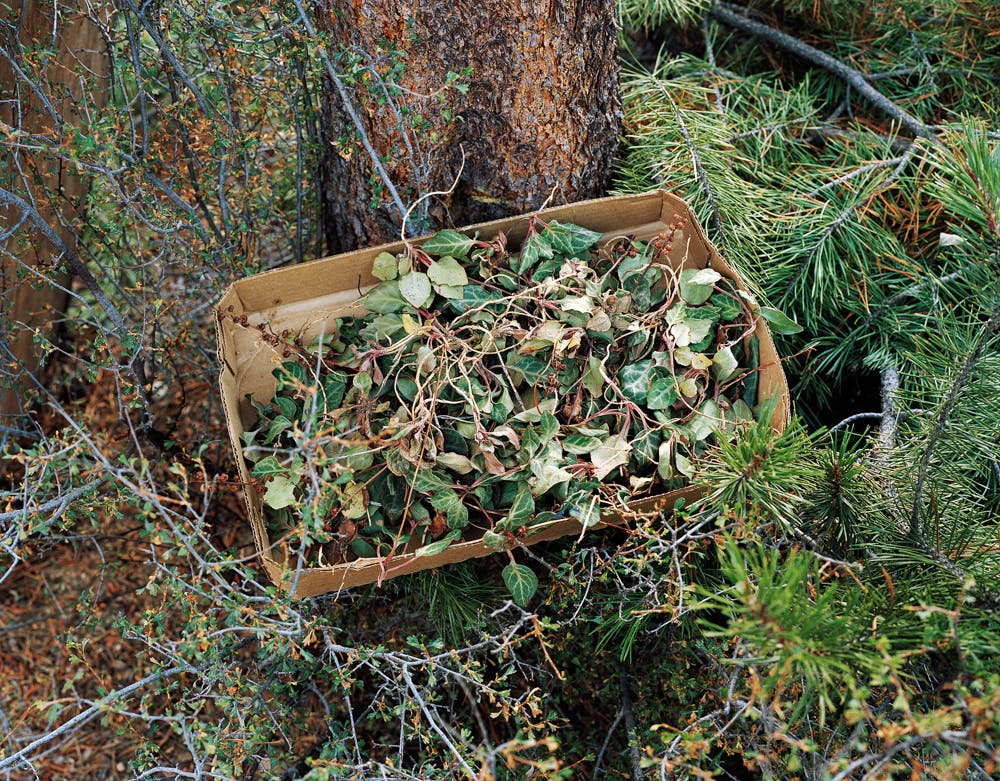 mushroom foraging 1300 per day erik johanson 39 of 42 These Bible Belt Christians Believe That Weed Is God's Perfect Medicine