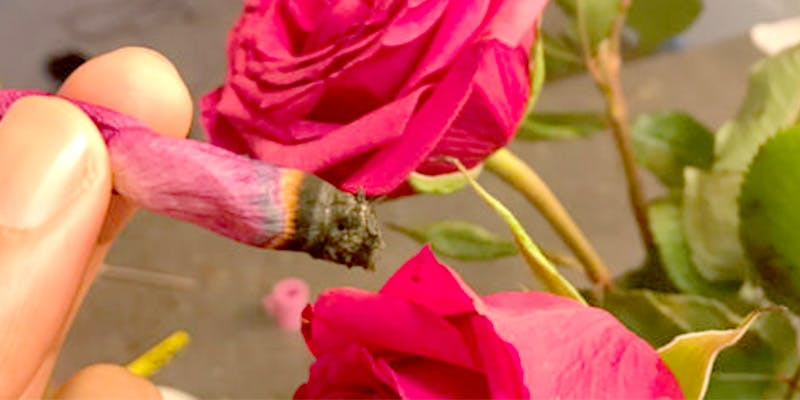 rose petal blunts
