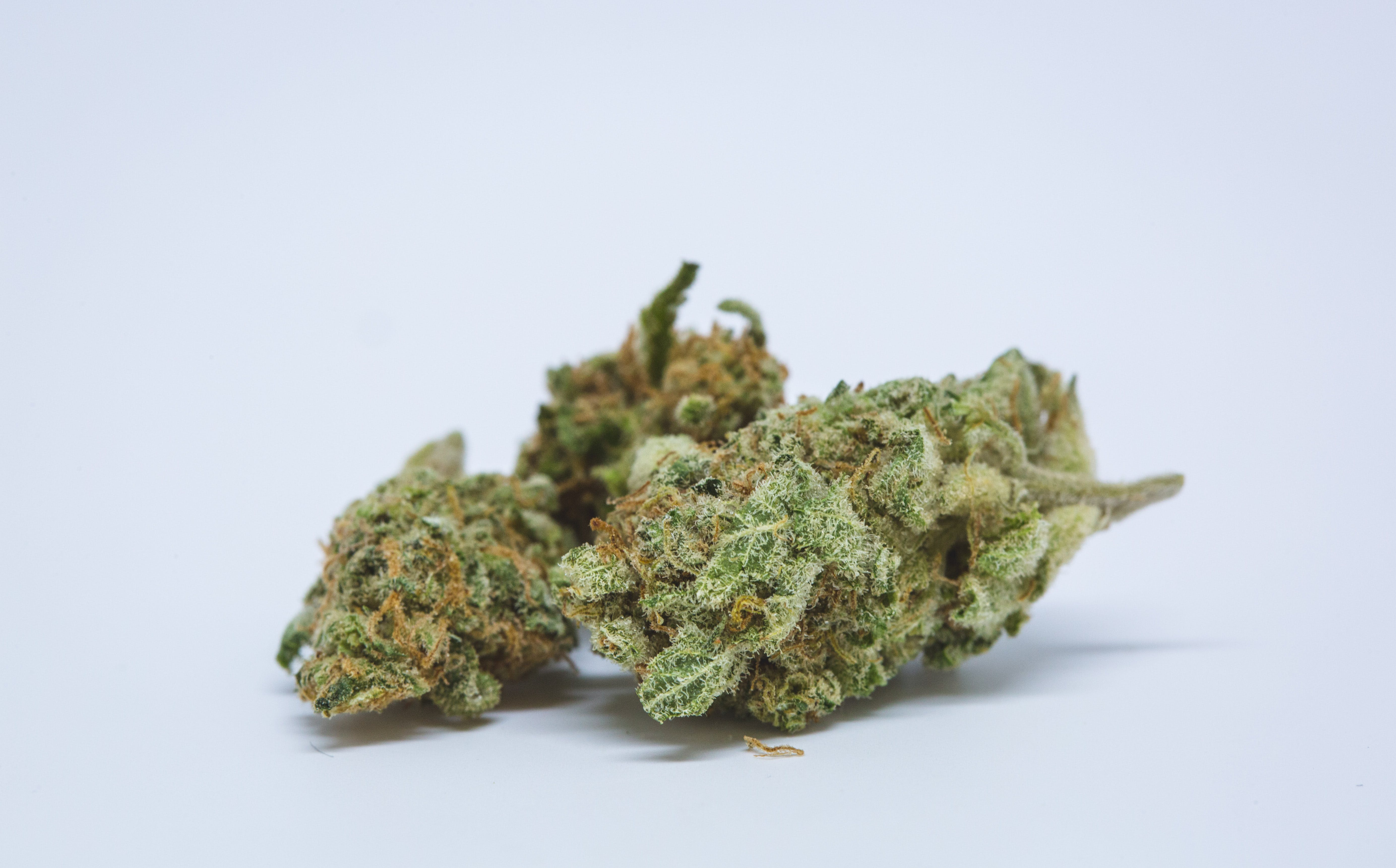 Best Buds White Russian 16 1 These Bible Belt Christians Believe That Weed Is God's Perfect Medicine