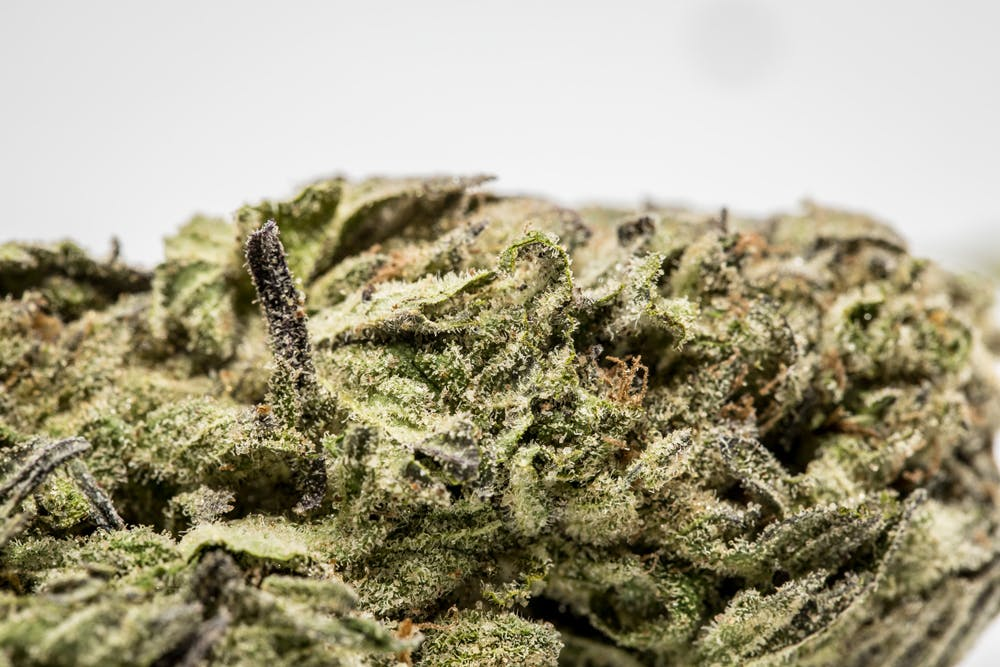 Candy Skunk 1 What needs to happen for Vermont to legalize marijuana