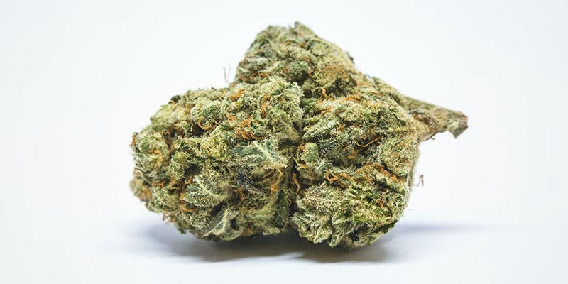 Cinderella These Bible Belt Christians Believe That Weed Is God's Perfect Medicine
