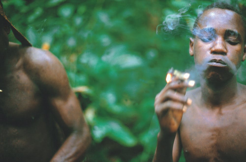 pygmy smoking hemp marijuana grow africa congo