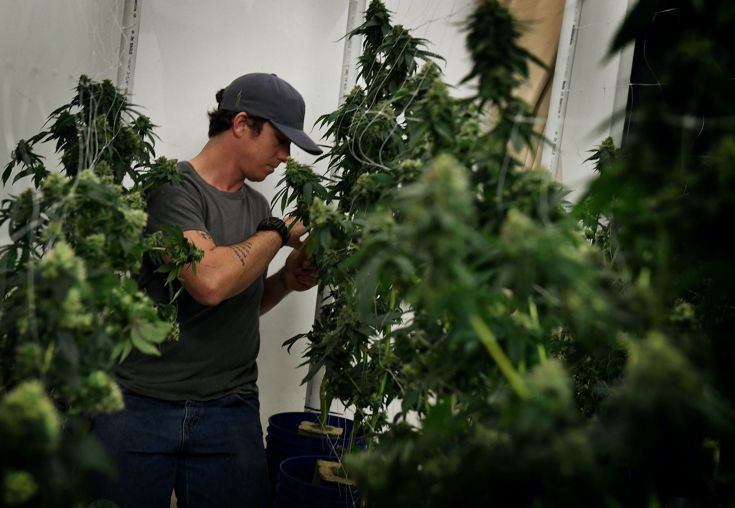 GettyImages 660387322 How robots could run the future cannabis industry, from farming to delivery