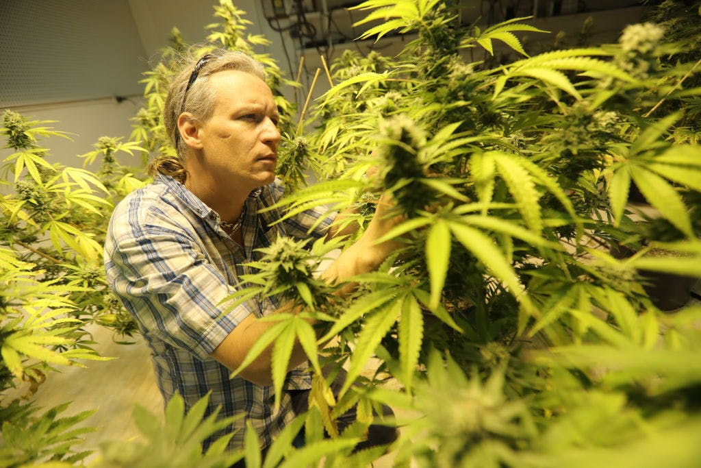 GettyImages 816369142 Why California is important for ending marijuana prohibition in the U.S.