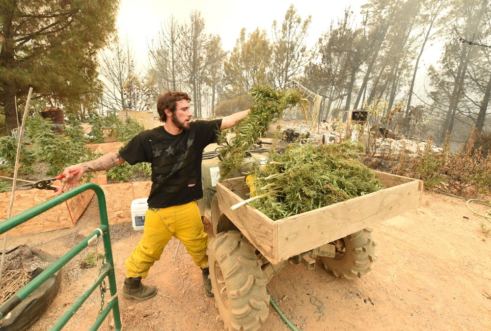 Most Californias marijuana farms fall within the states high wildfire risk Red Zones. 2 of 2 People Are Being Arrested For Driving High, Even Though Theyve Never Smoked Weed