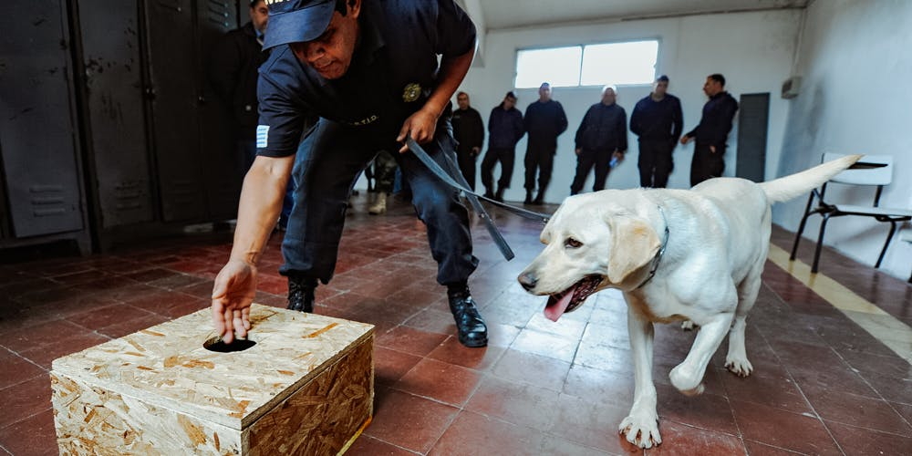 New Colorado Police Dogs Being Trained to Ignore Pot