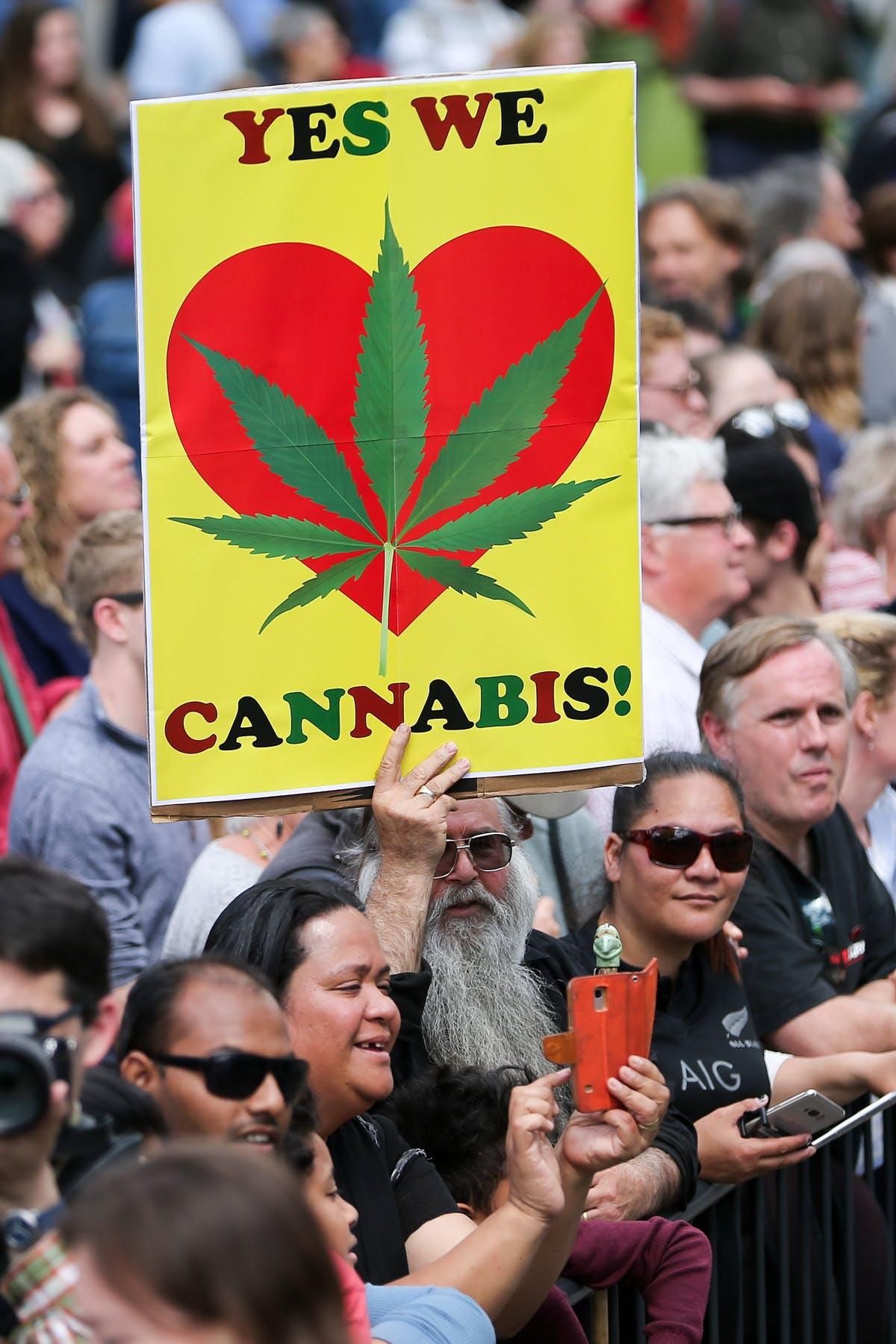 New Zealand may legalize recreational cannabis 2 of 2 Meet the cannabis kombucha guru