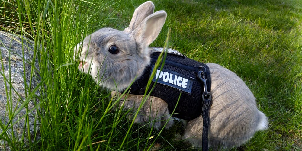 Drug-Sniffing Bunnies in a Police Uniform