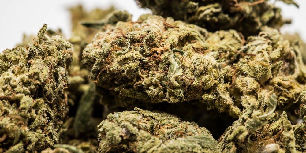Strawberry Kush Marijuana Strain