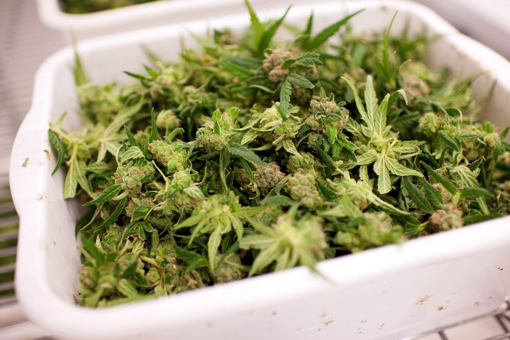Tweed Hersheys Factory Larges Weed Marijuana Farm 1 of 5 These Bible Belt Christians Believe That Weed Is God's Perfect Medicine