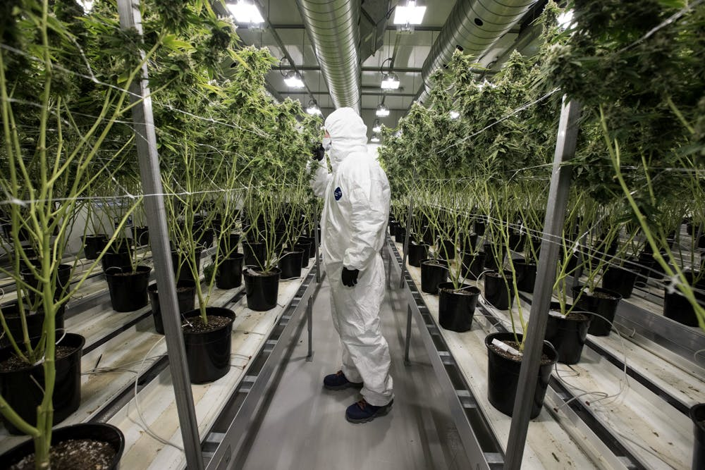 Tweed Hersheys Factory Larges Weed Marijuana Farm 5 of 5 Meet The Veteran Who Left The Marines to Start The Amazon of Weed