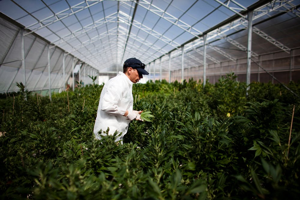 GettyImages 109913275 Why California is important for ending marijuana prohibition in the U.S.