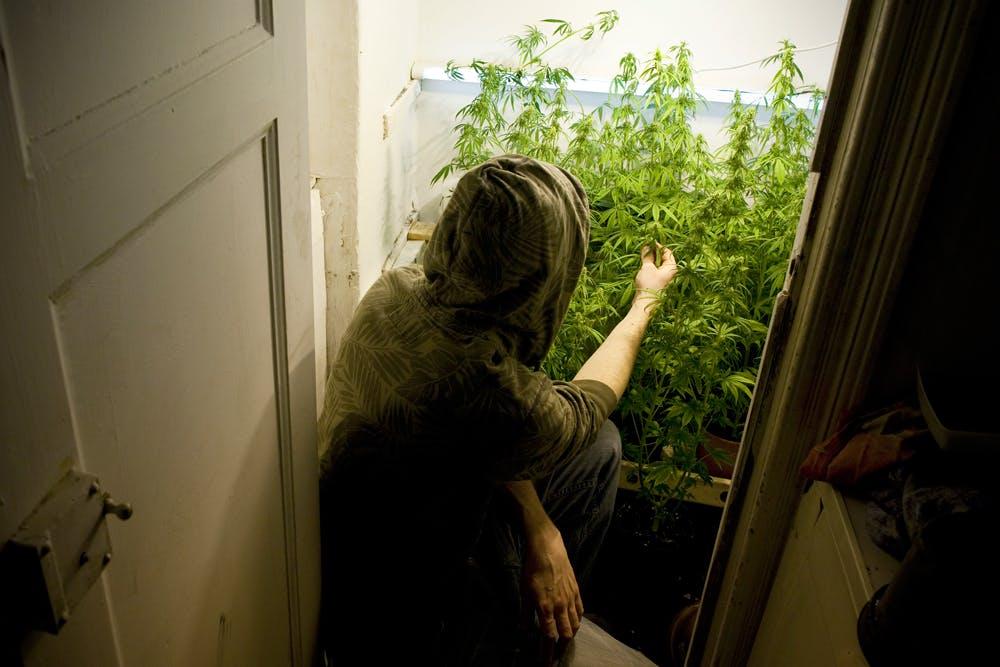 GettyImages 465819262 Meet the cannabis kombucha guru