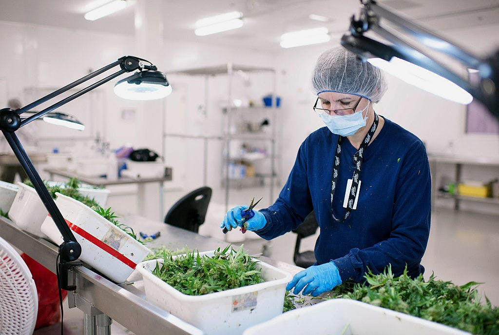 GettyImages 497914296 How robots could run the future cannabis industry, from farming to delivery