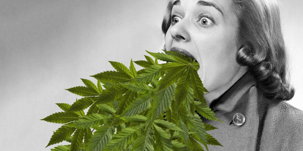 woman throwing up marijuana leaves from CHS