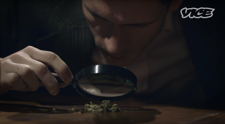 Screenshot 2017 11 22 10.09.54 Meet the cannabis kombucha guru