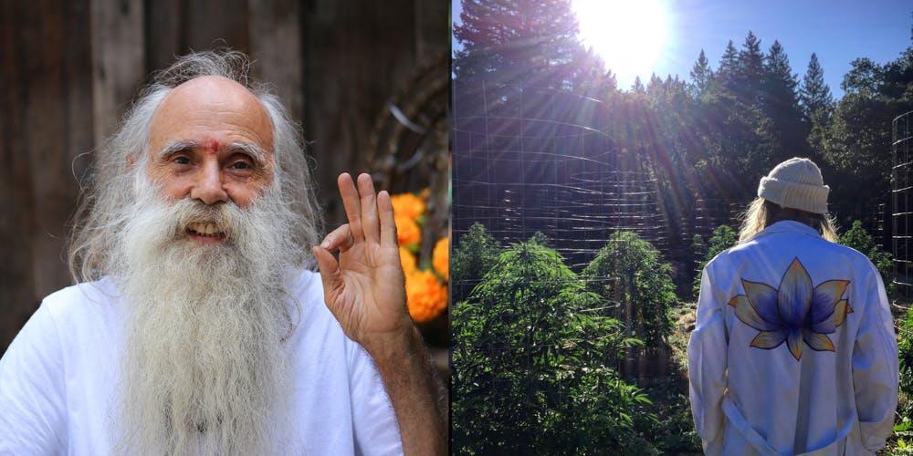 Swami Select at Ganja Ma Gardens