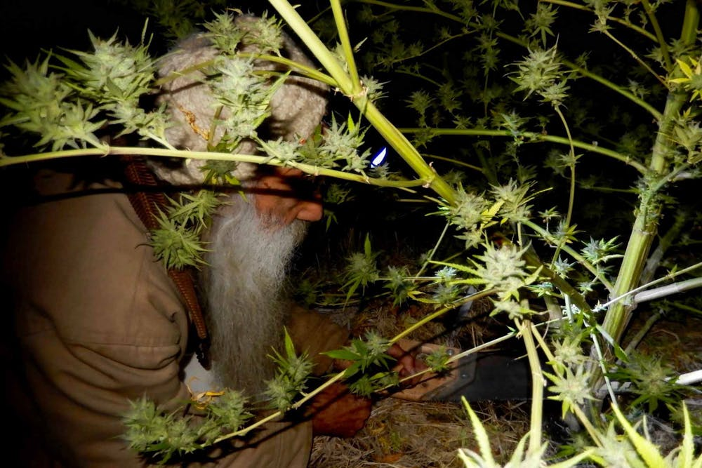 Swami Is The Worlds Most Chill Cannabis Grower 1 of 5 Grab your weed, grab your snacks, theres going to be a Lord Of The Rings TV series