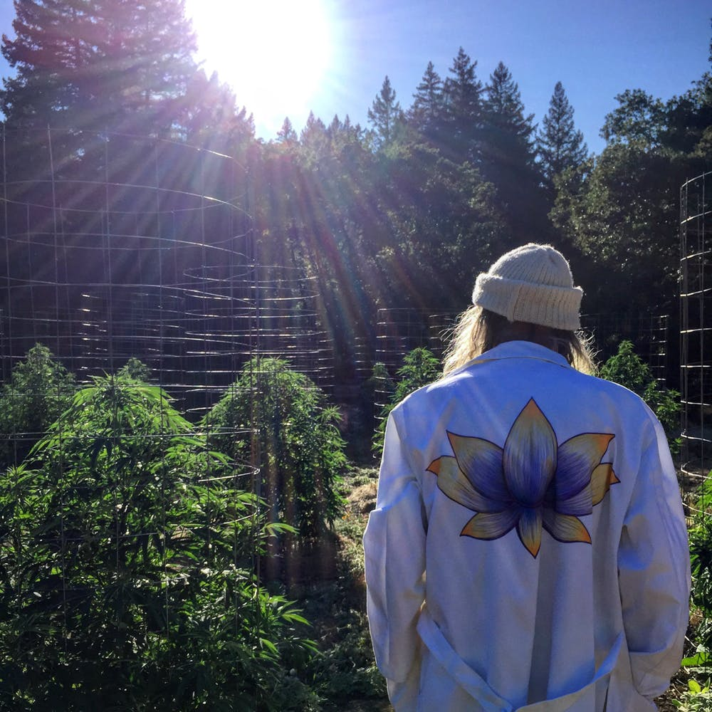 Swami Is The Worlds Most Chill Cannabis Grower 7 of 14 Grab your weed, grab your snacks, theres going to be a Lord Of The Rings TV series