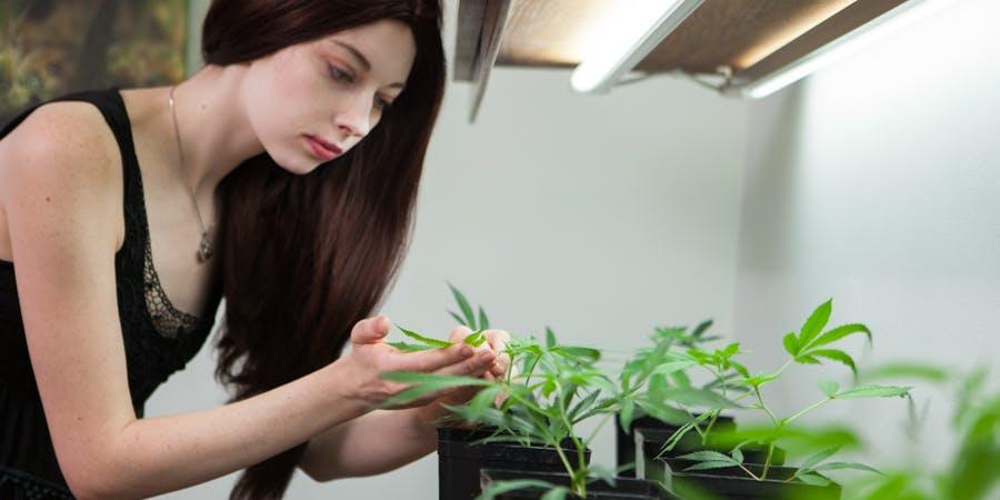 Woman inspecting marijuana crops at dispensary