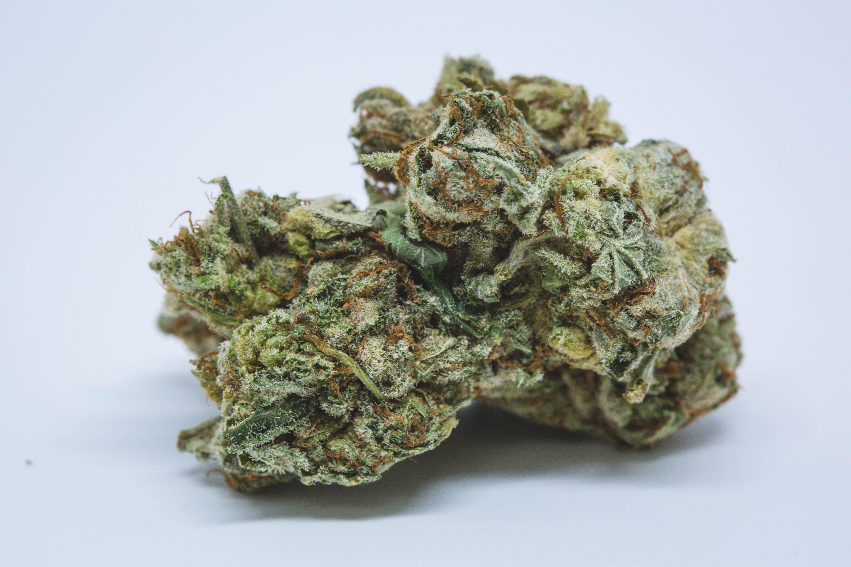Power Plant Weed; Power Plant Cannabis Strain; Power Plant Sativa Marijuana Strain