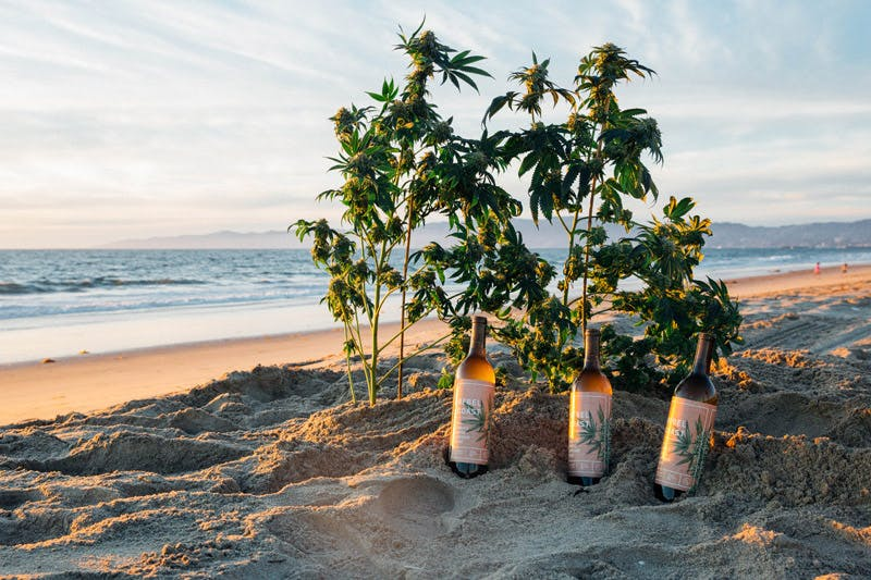 3 bottles beach home v1 Why California is important for ending marijuana prohibition in the U.S.