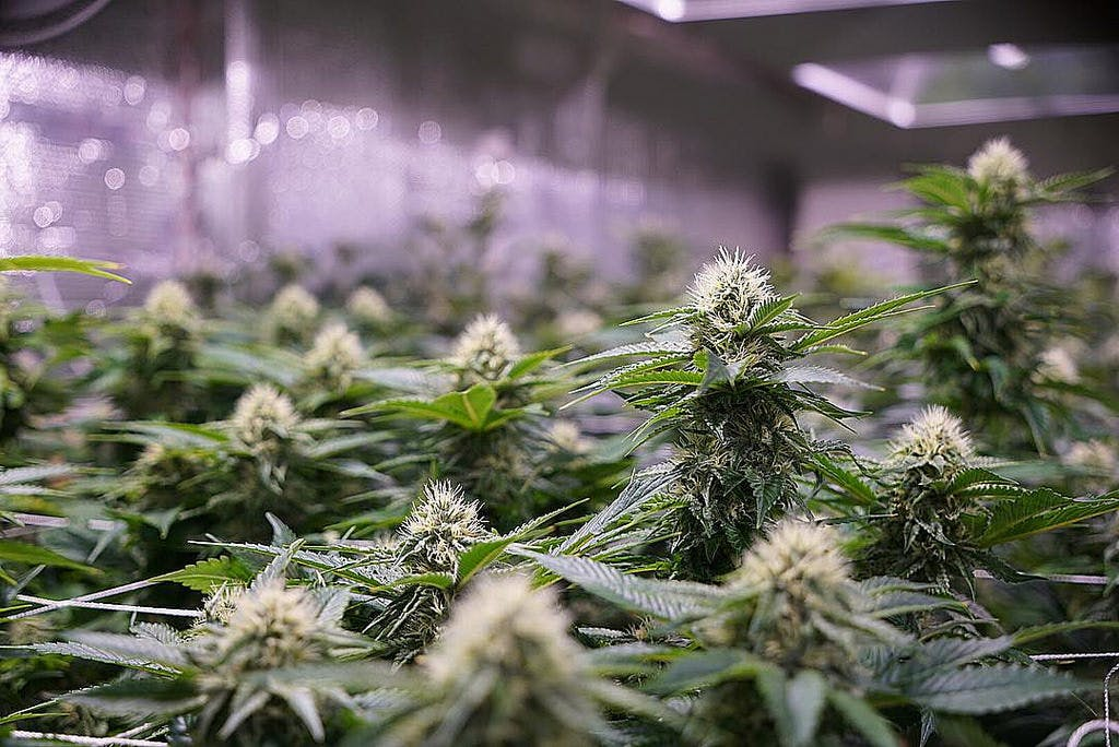36648201405 4b5b2190cd b What needs to happen for Vermont to legalize marijuana