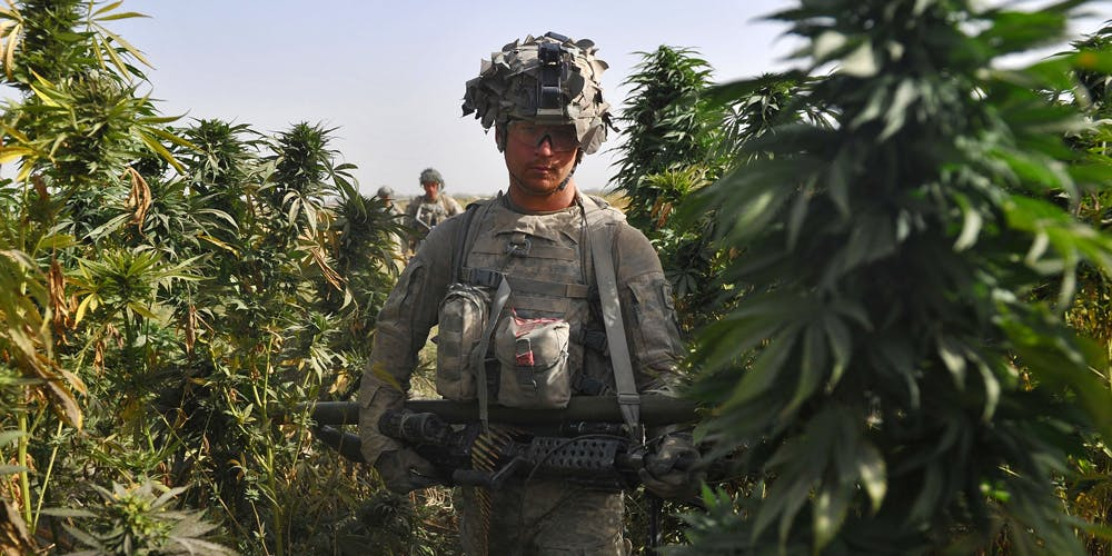 Man walks in a Marijuana field during a patrol