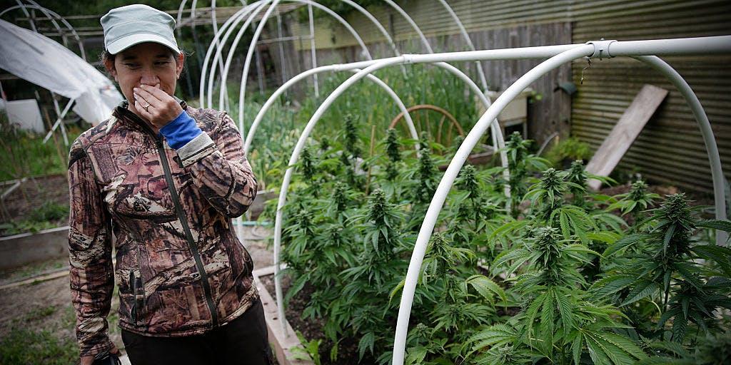 Woman walking through her Cannabis Farm