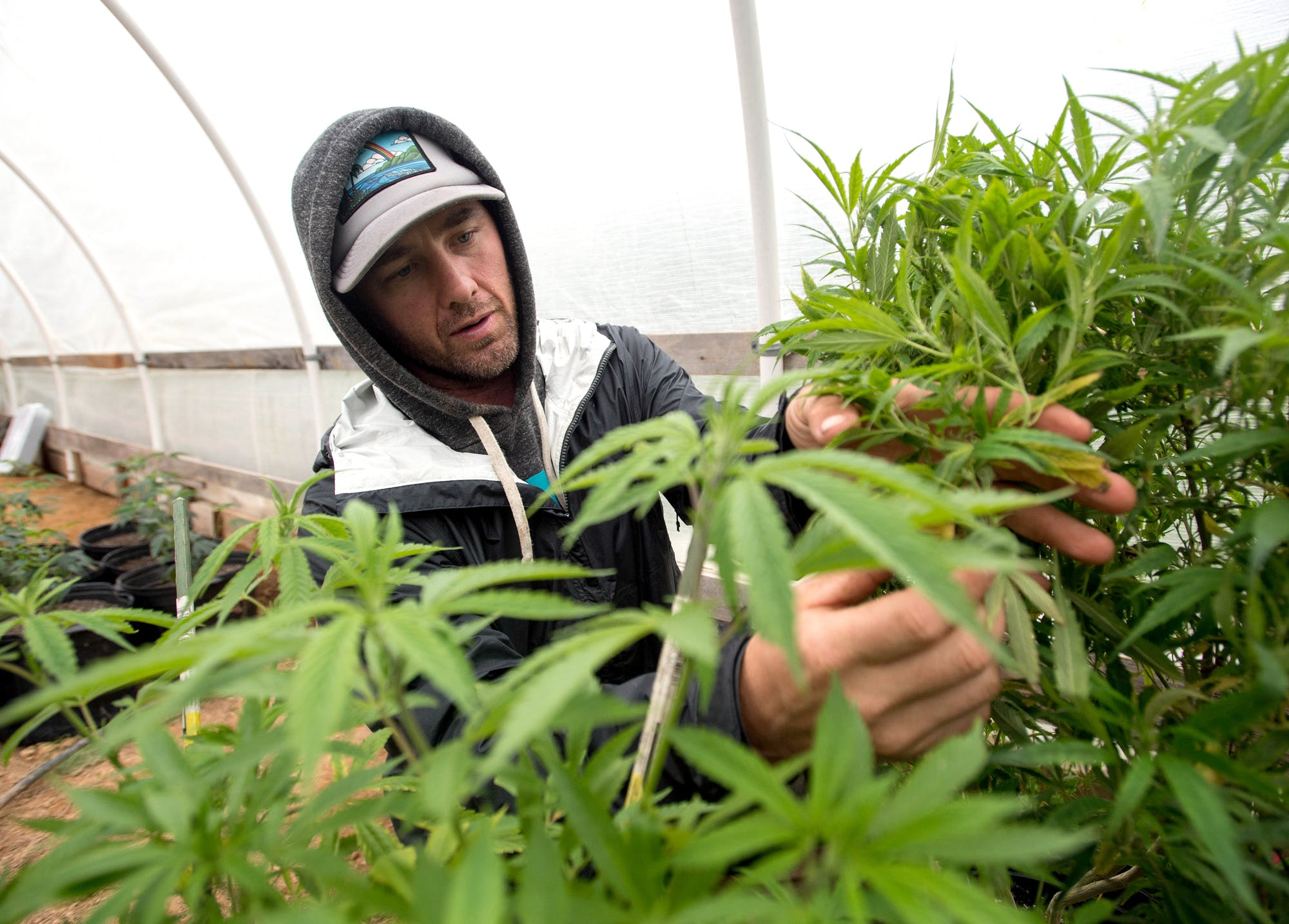 How to grow weed with as little effort as possible