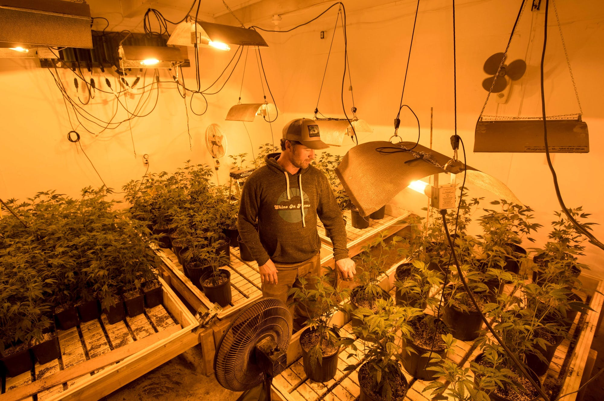 How to grow weed with as little effort as possible 2 of 3 What needs to happen for Vermont to legalize marijuana