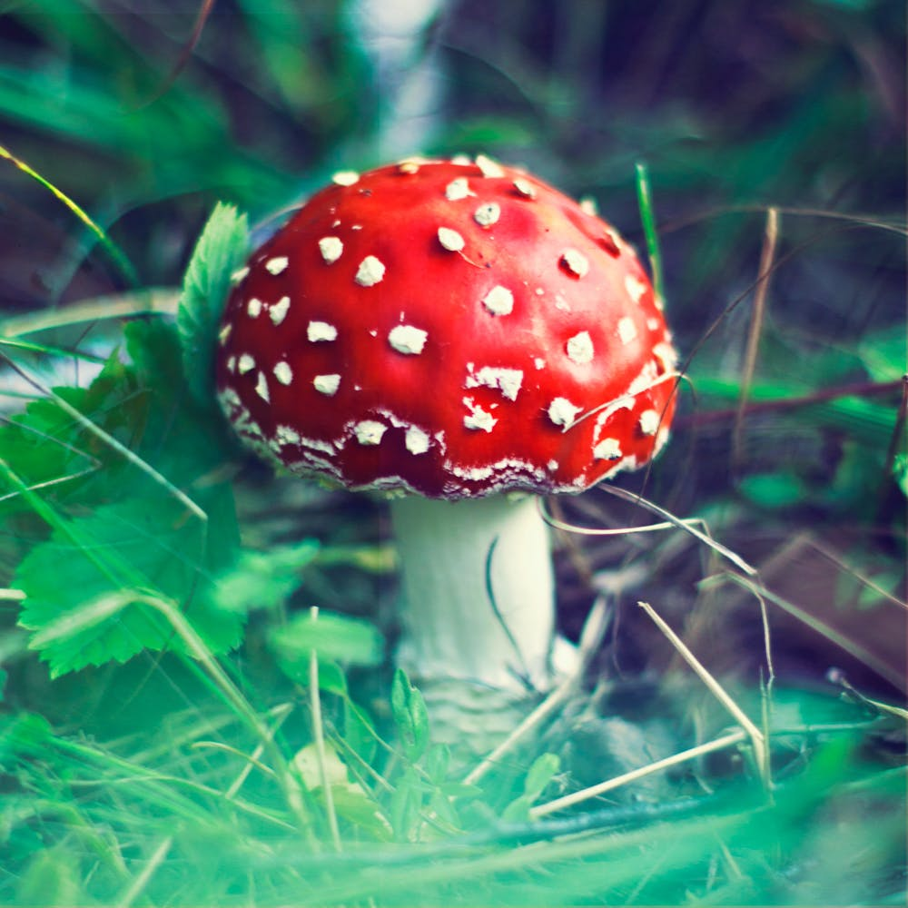 The psychedelic origins of Santa 1 of 3 What needs to happen for Vermont to legalize marijuana