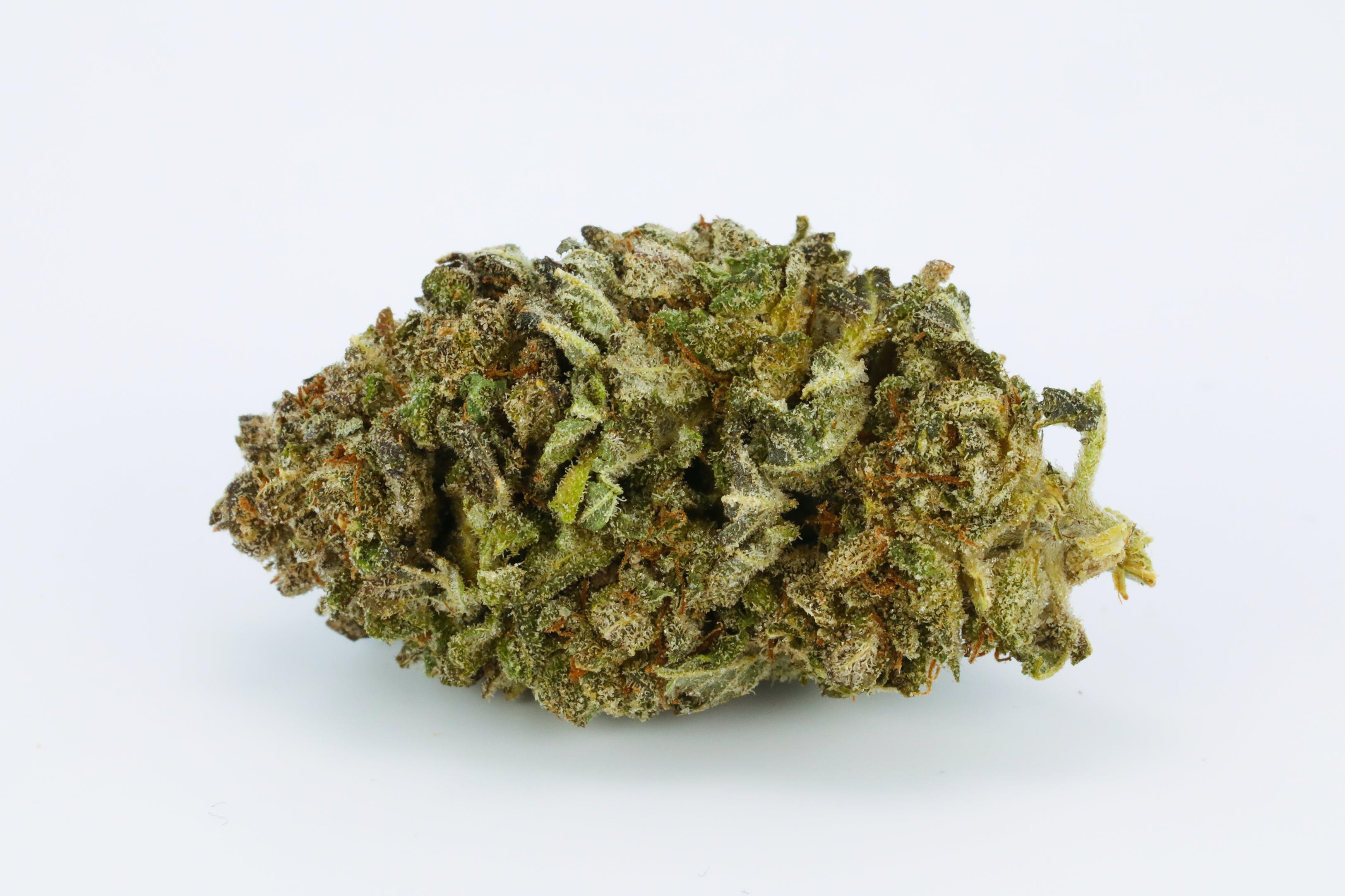 Blue Dragon Weed; Blue Dragon Cannabis Strain; Blue Dragon Hybrid Marijuana Strain