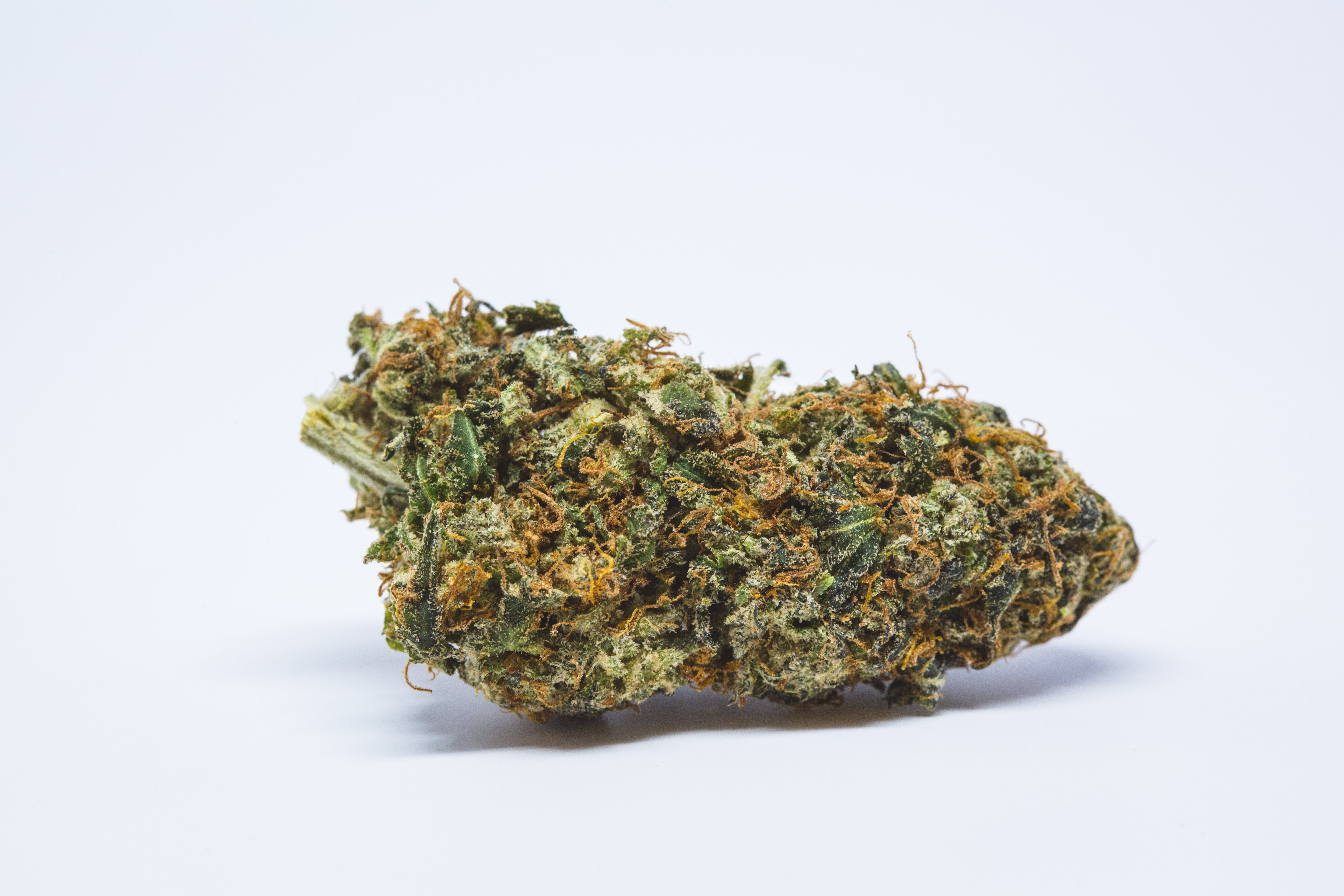 Cannalope Haze Strain / This is largely due to the the.