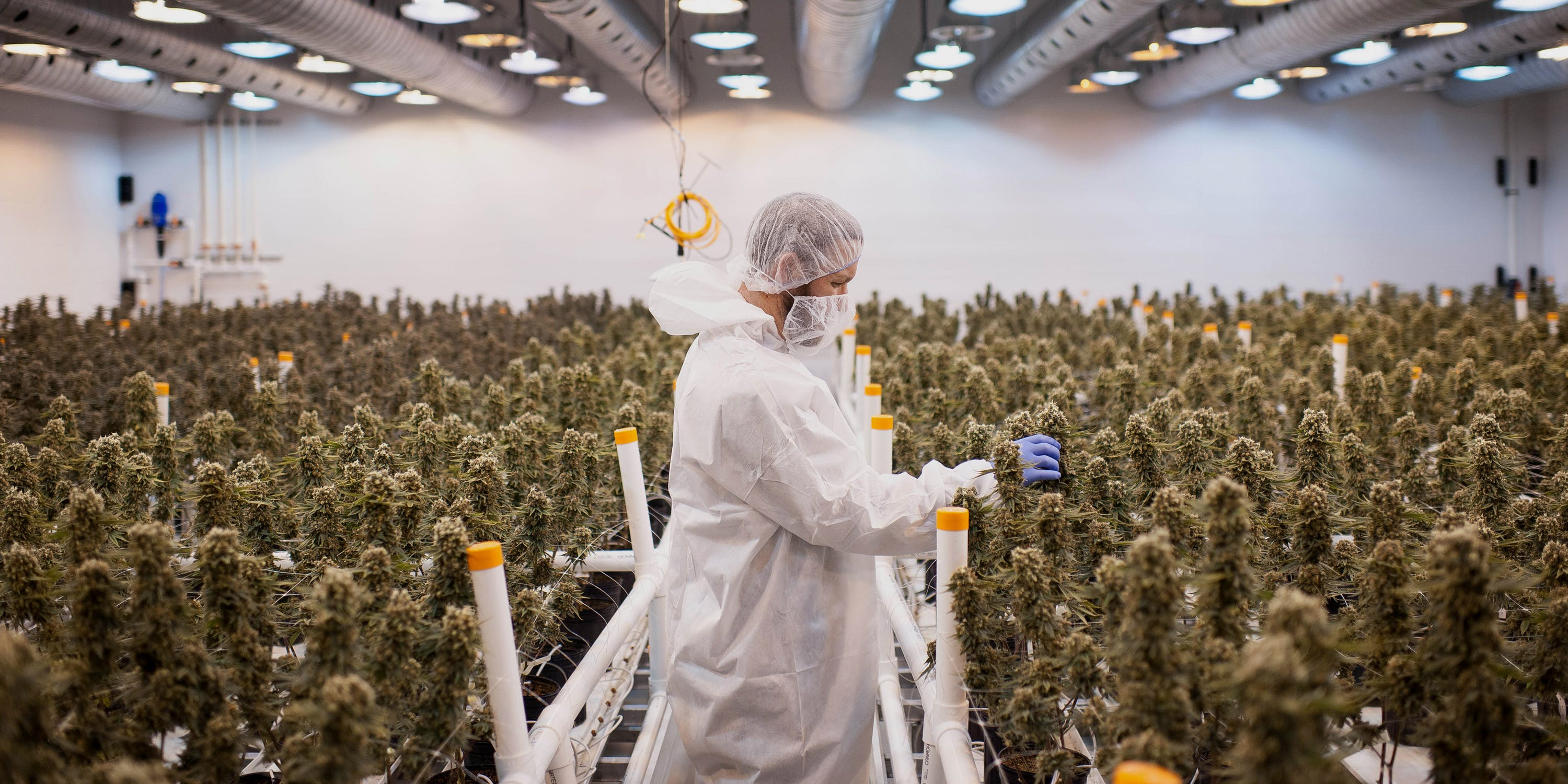 Man in A protective suit in a Cannabis Grow-op