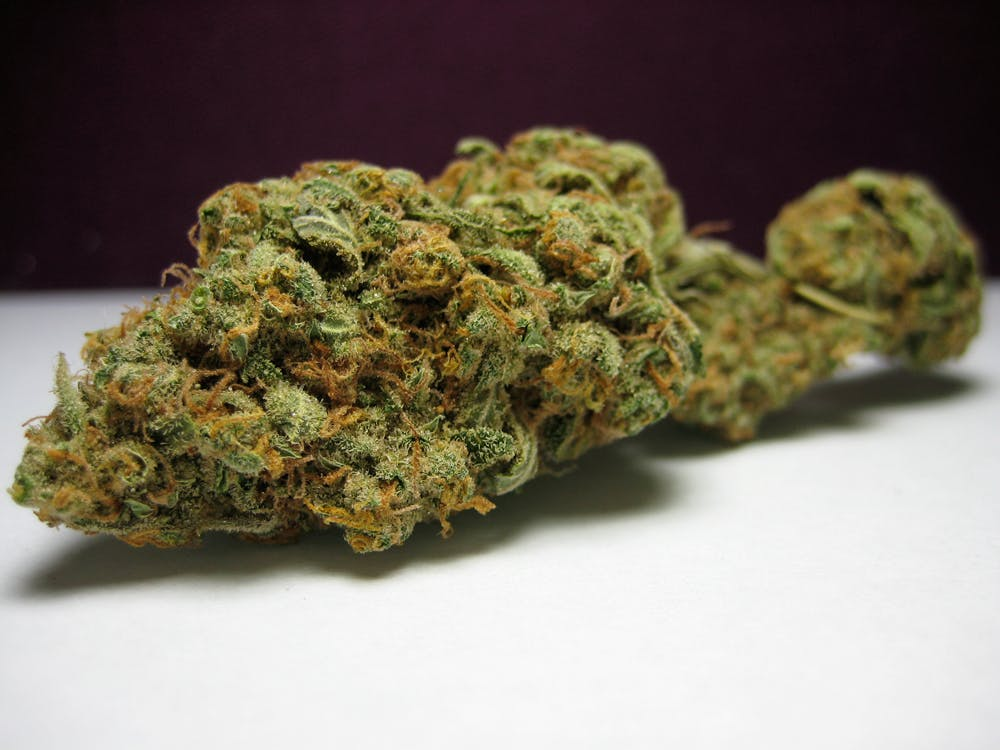 silverhaze resized The government holds a patent on medical marijuana, yet claims it has no medical value