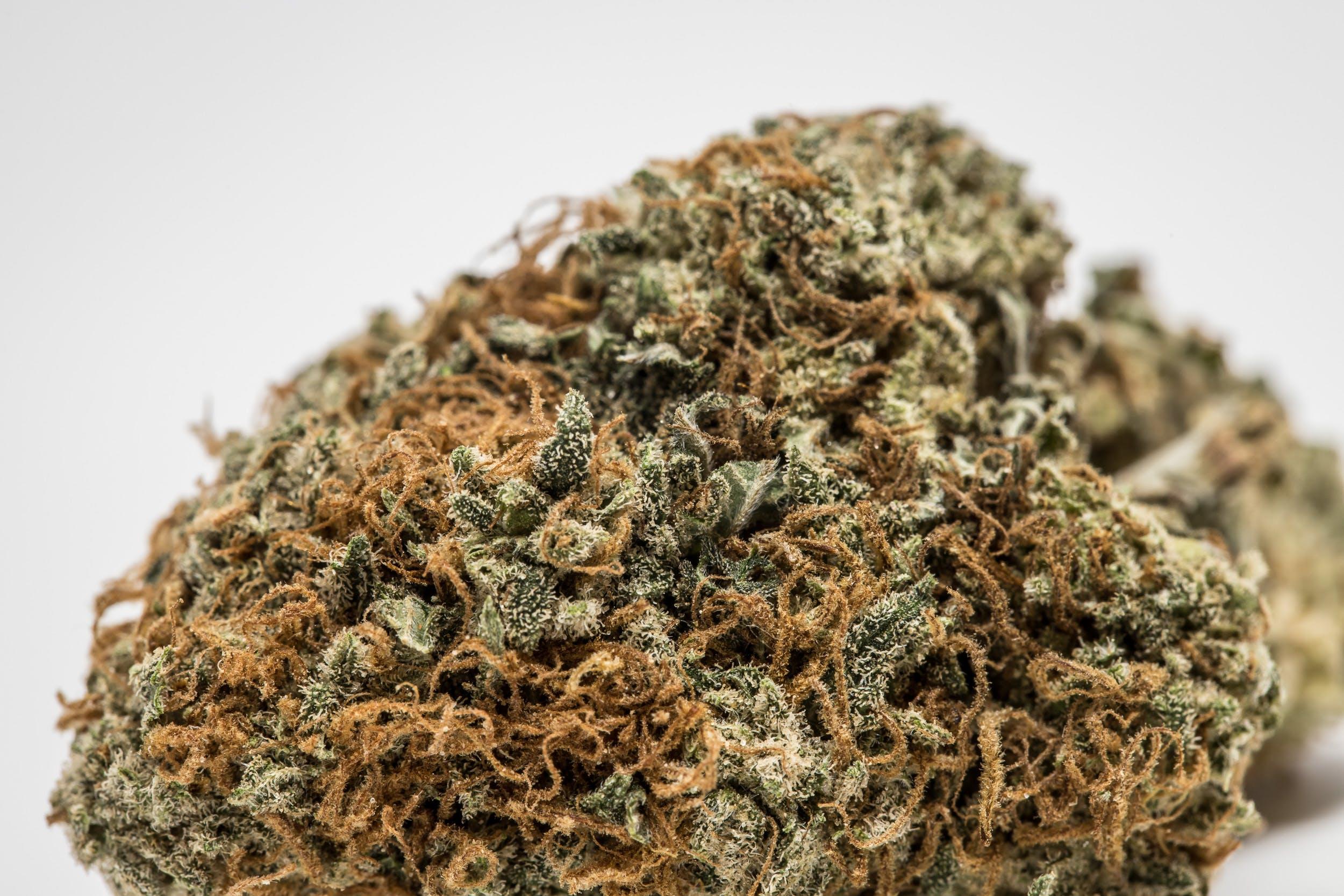 Kimbo Kush Marijuana Strain